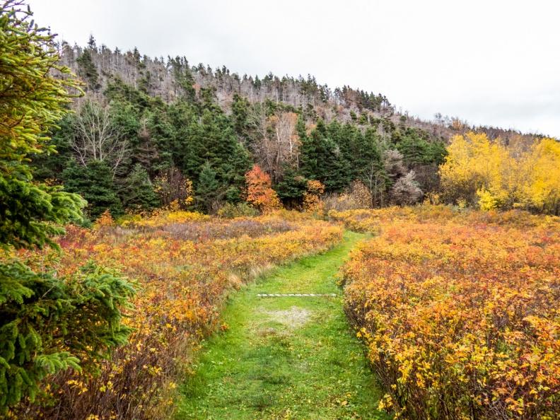 An open field at Le Buttereau Trail