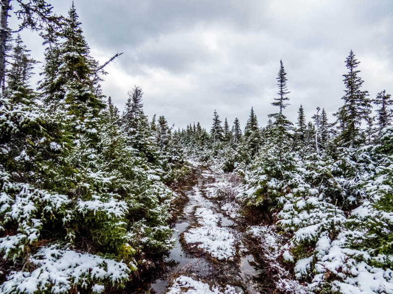 Trail Covered In Snow